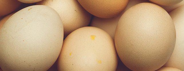 egg-643X250