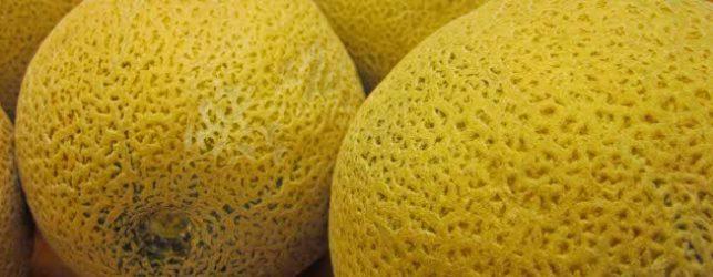 melon31